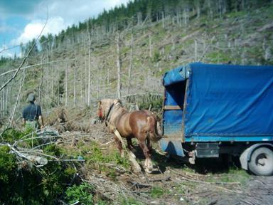 Drevorubač s koňom